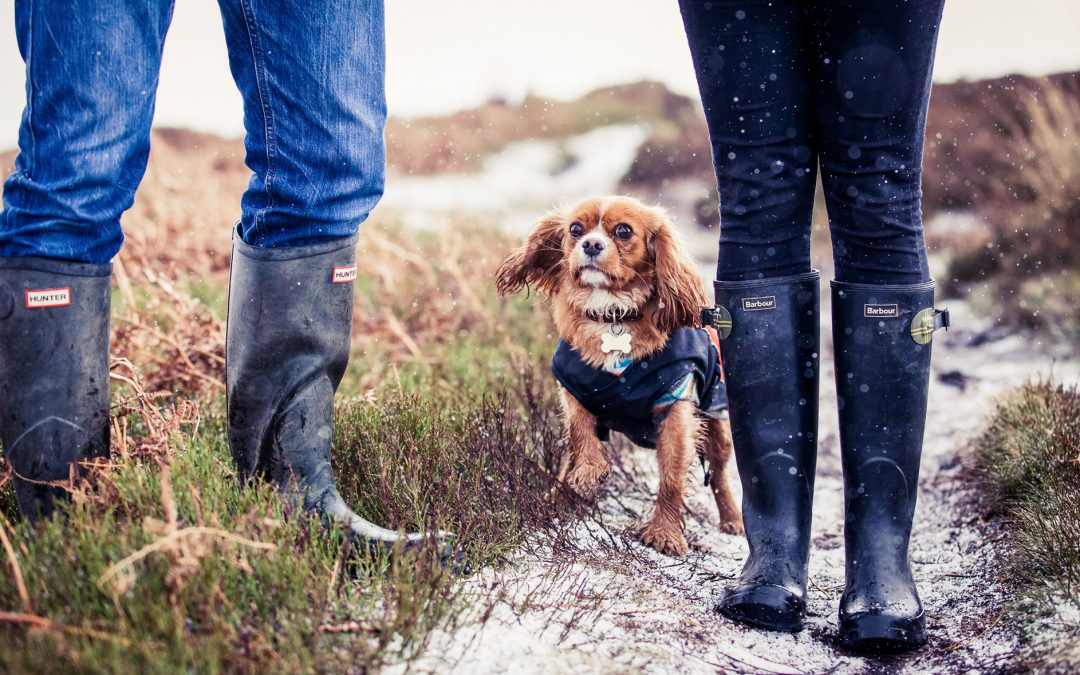 Yorkshire dog photography……dogs at weddings…… is it too much to handle or the best thing ever?